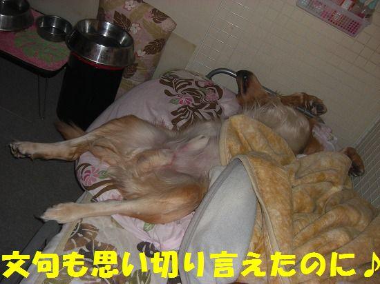 8_20111210205453.jpg