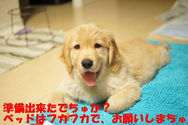 8_20120110213844.jpg