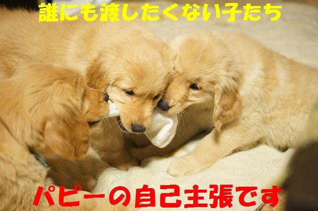 8_20120111204704.jpg