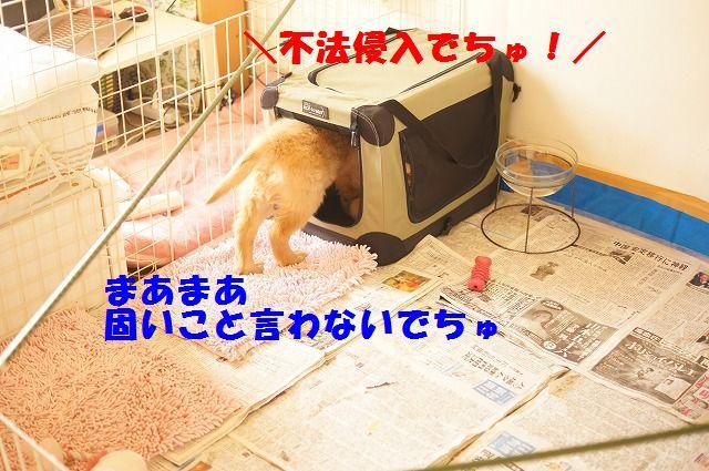 8_20120118203843.jpg