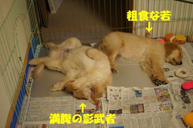 8_20120120215551.jpg