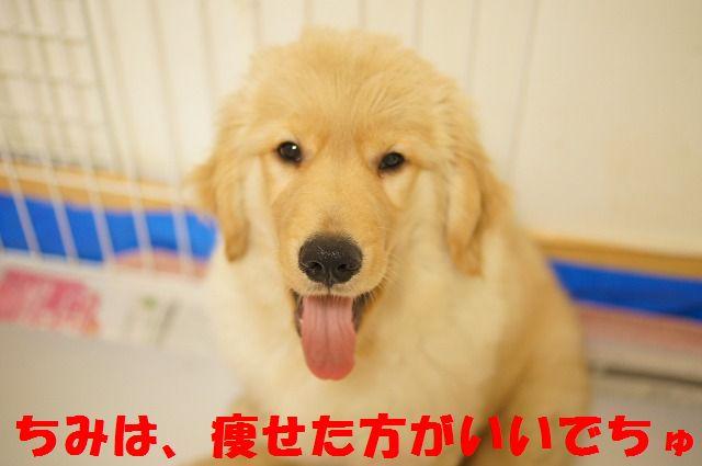 8_20120122230337.jpg