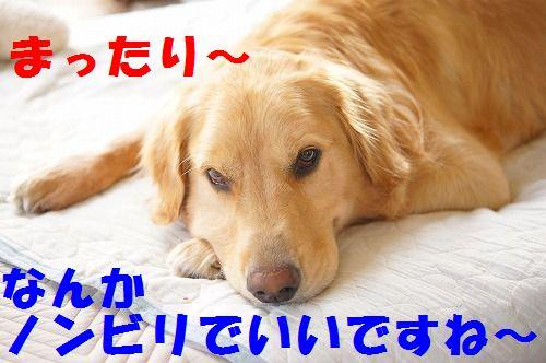 9_20111123224949.jpg