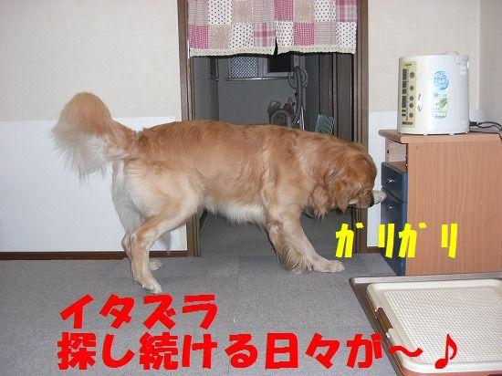 9_20111207193831.jpg