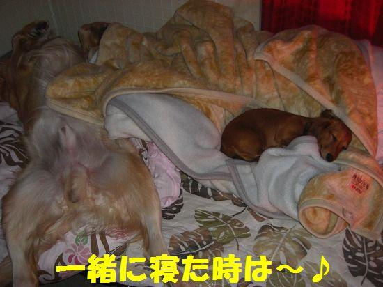 9_20111210205453.jpg