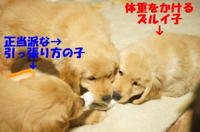 9_20120111204704.jpg