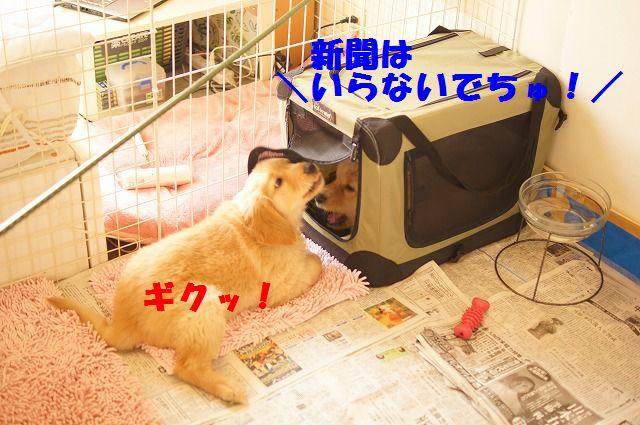 9_20120118203842.jpg