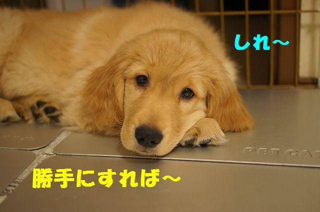 9_20120119222450.jpg