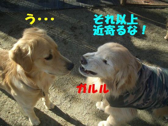 CIMG0278.jpg