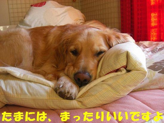 CIMG4320_20111229204114.jpg