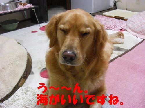 CIMG4432.jpg