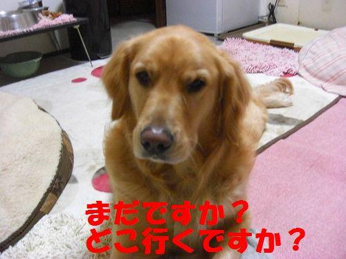 CIMG4433.jpg