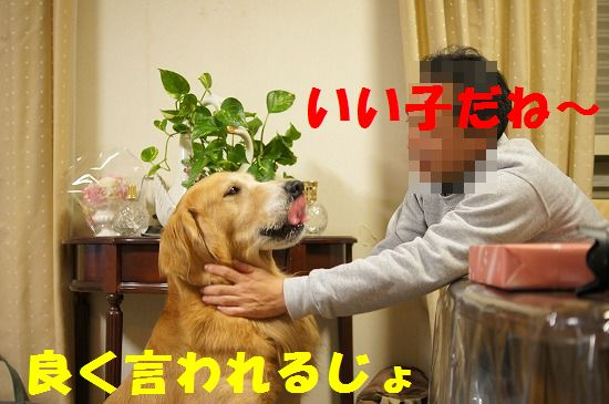 DSC01146_20111204221611.jpg