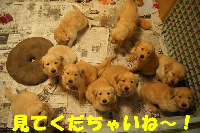 DSC01909_20120104215823.jpg