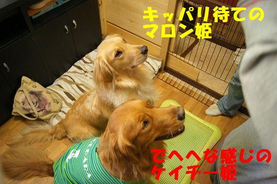 DSC02472_20111230224144.jpg