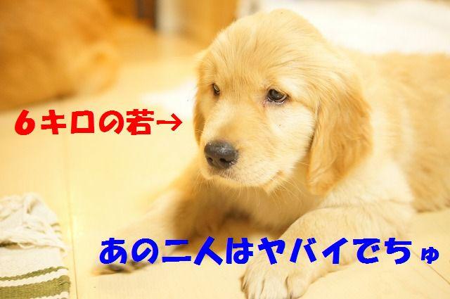DSC03156_20120107202858.jpg