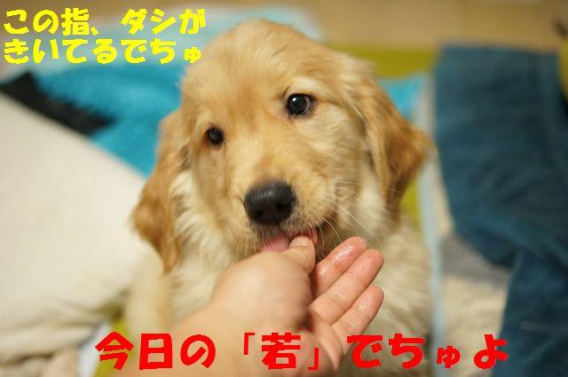 DSC03312_20120109223129.jpg