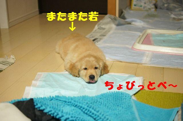 DSC03339_20120115193103.jpg