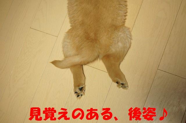 DSC03494.jpg