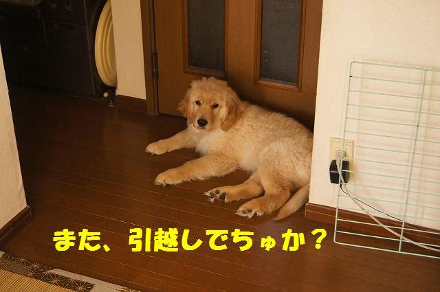 DSC05035_20120127233141.jpg