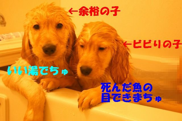 DSC05320_20120129221235.jpg