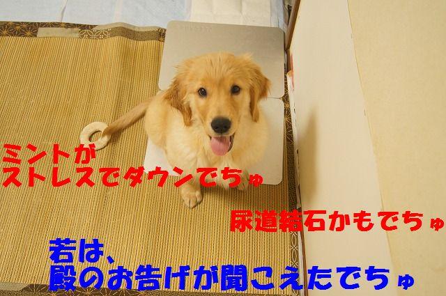 DSC063611.jpg