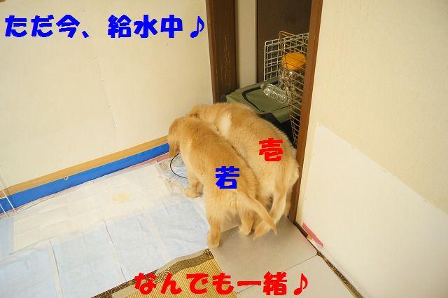 DSC063894.jpg