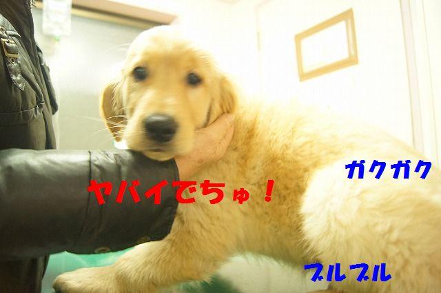 DSC06450_20120210192454.jpg