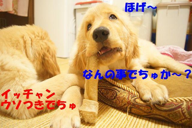 DSC06578_20120213210247.jpg