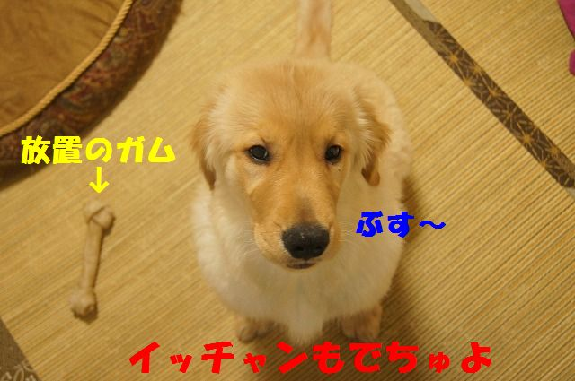 DSC06603_20120213210304.jpg