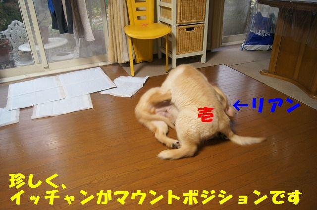 DSC06771.jpg