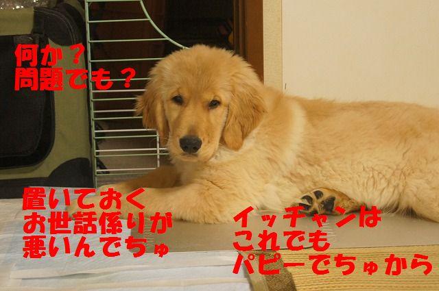DSC06937.jpg
