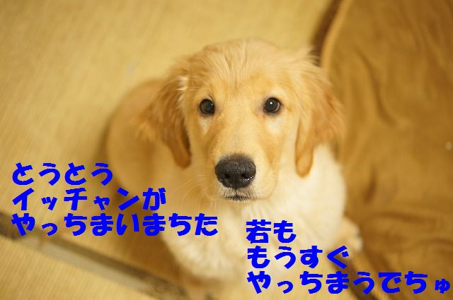 DSC07068.jpg