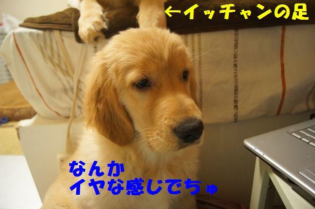 DSC07083_20120220230141.jpg