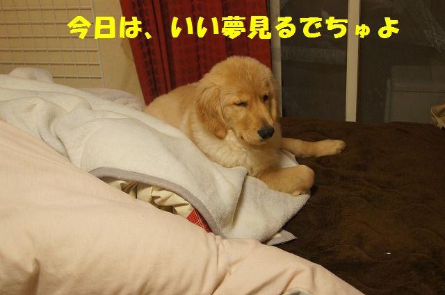 DSC07089.jpg