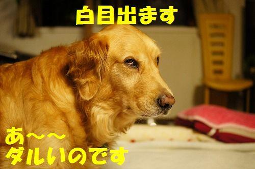 DSC07120.jpg