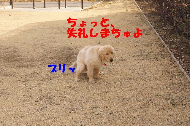 DSC07156.jpg