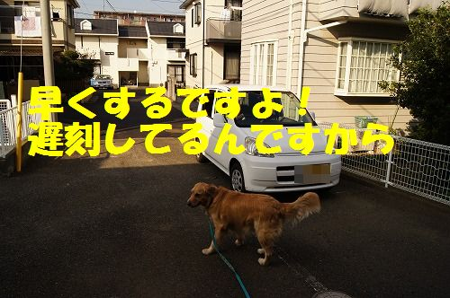 DSC07181.jpg