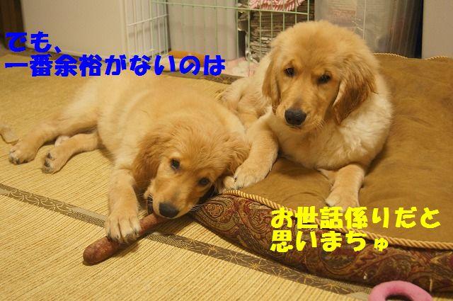 DSC07329_20120223212301.jpg