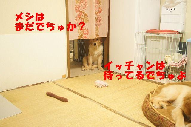 DSC07331.jpg