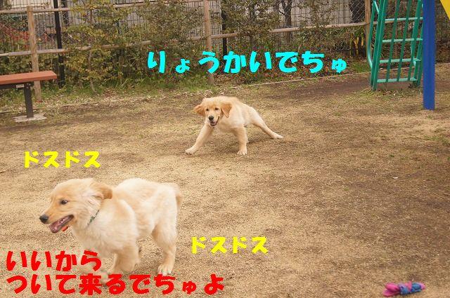 DSC07367.jpg