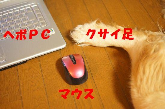 DSC07532.jpg