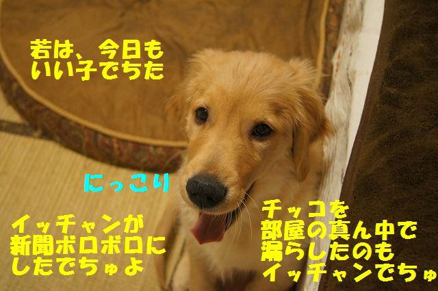 DSC07595.jpg