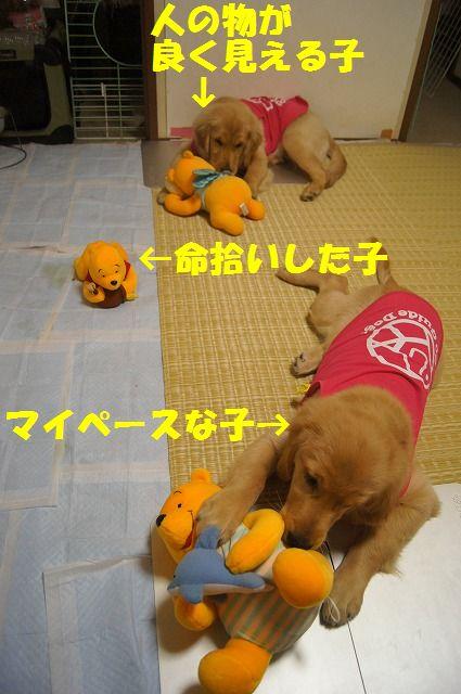 DSC08108_20120315211006.jpg