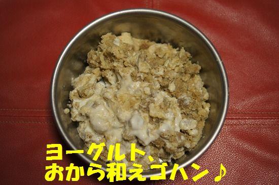 DSC08293.jpg