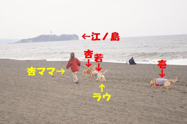 DSC08410.jpg
