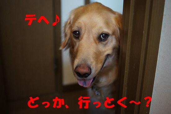 DSC08643.jpg