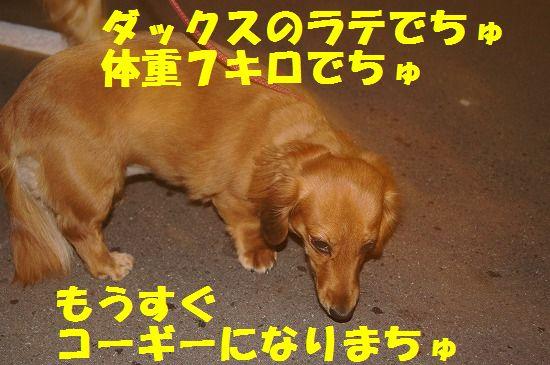 DSC08758.jpg