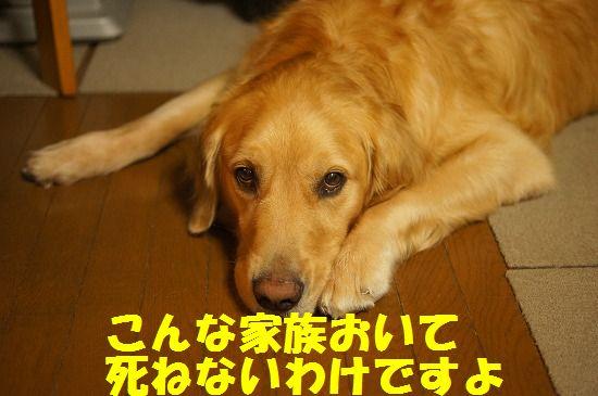 DSC08826.jpg