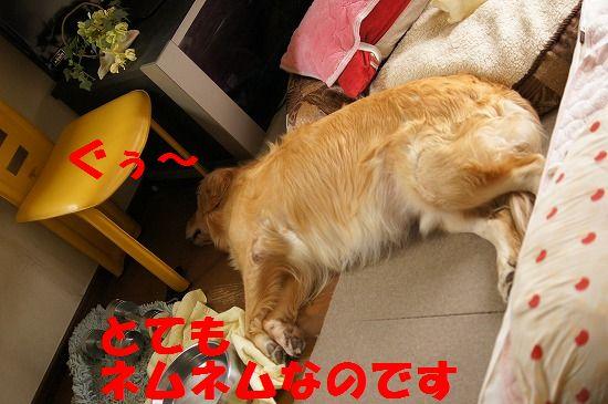 DSC08837.jpg